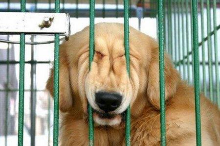 Cмешные фотографии животных